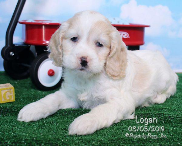 Logan (M) – Reserved