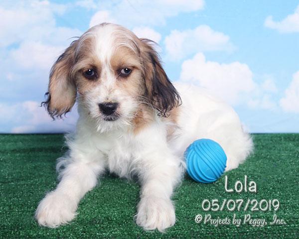 Lola (F)