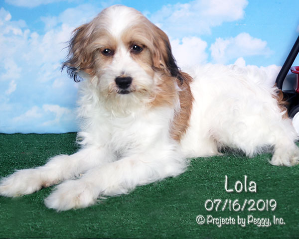 Lola (F) » Martin's Double E Kennel, LLC