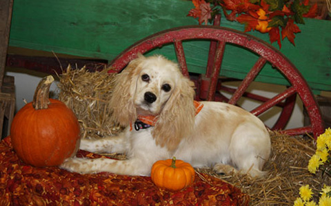 Fall Picture of Lottie