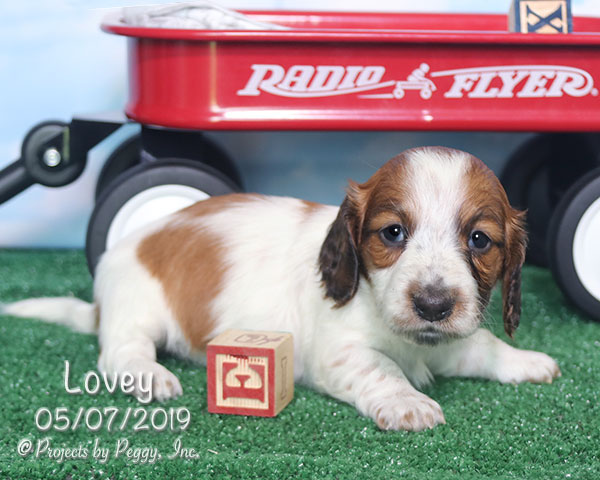 Lovey (F) – Reserved