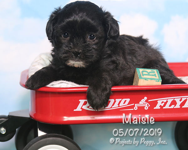 Maisie (F)