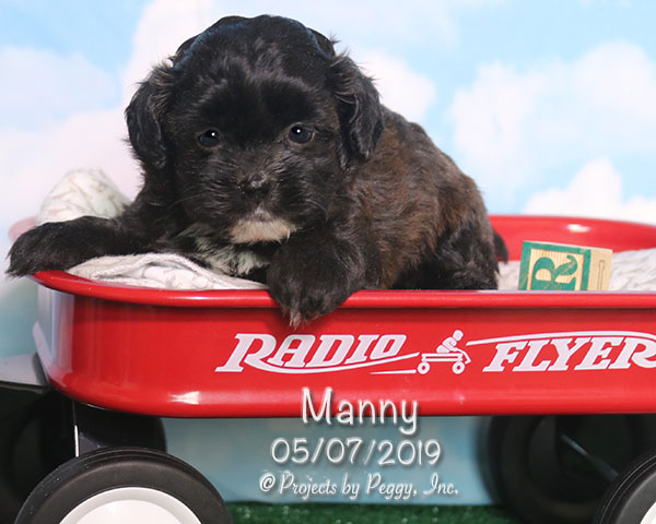 Manny (M)