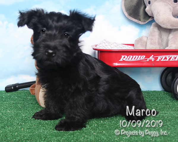 Marco (M)