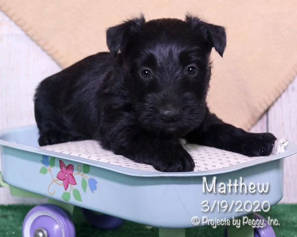 Matthew (M)