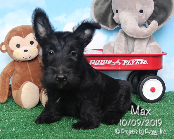 Max (M) – Reserved