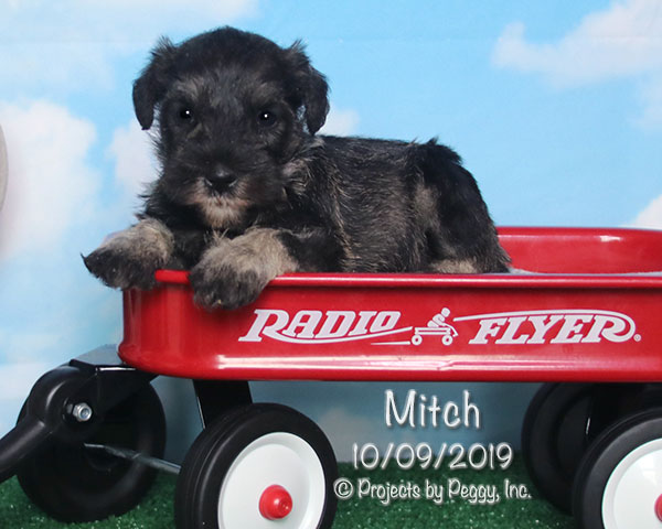 Mitch (M) – Sold