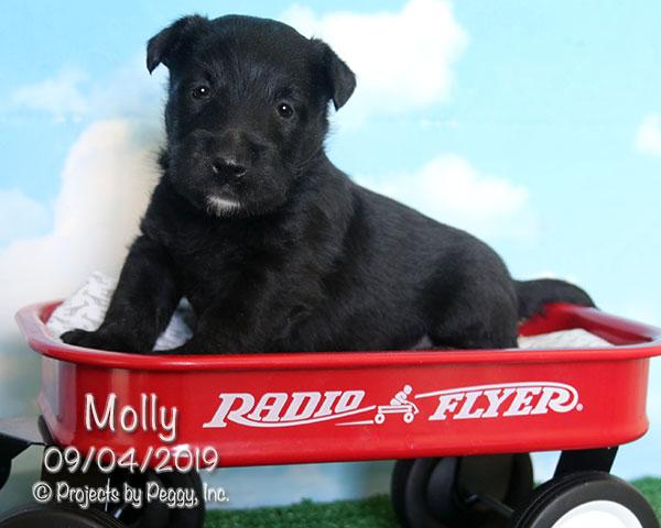 Molly (F)