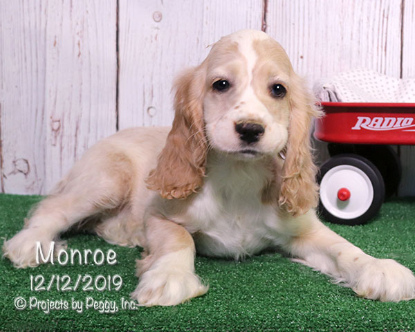 Monroe (M) – Reserved