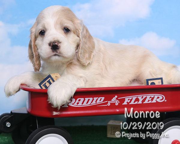 Monroe (M)
