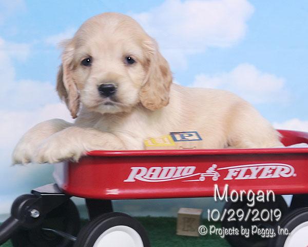 Morgan (M)