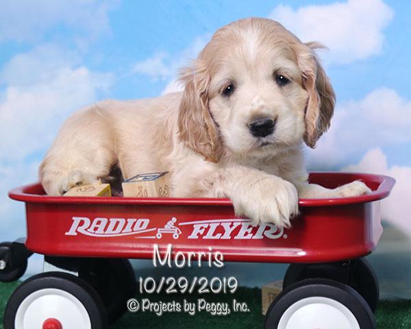 Morris (M) – Reserved