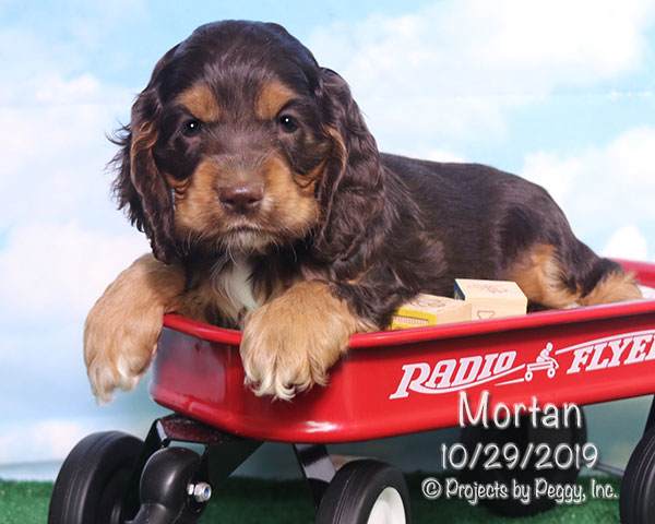 Mortan (M) – Reserved
