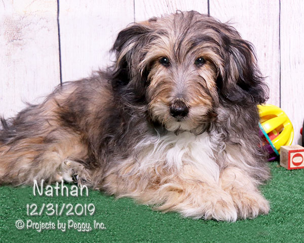 Nathan (M)