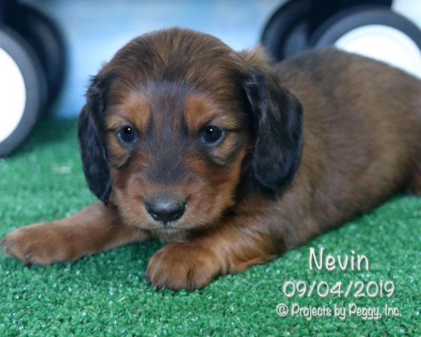 Nevin (M)