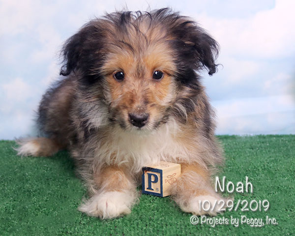 Noah (M)