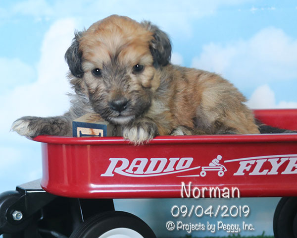 Norman (M) – Reserved