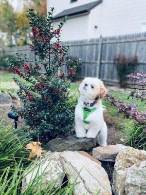 Best Puppy Ever!