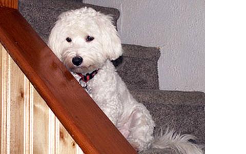 Ozzy is a Wonderful Dog!