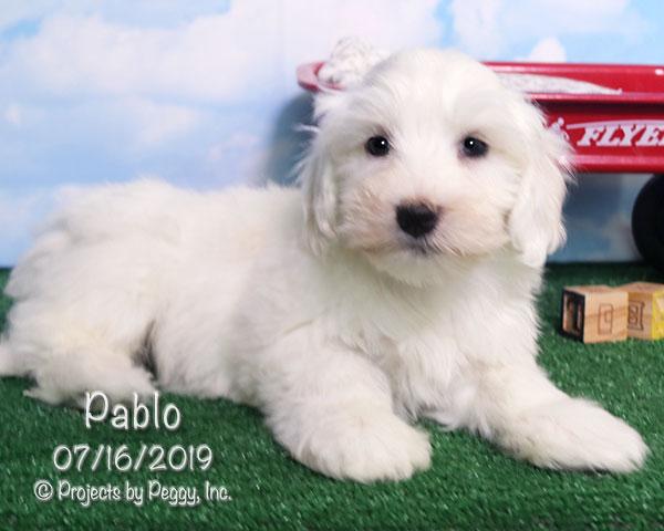 Pablo (M) – Sold