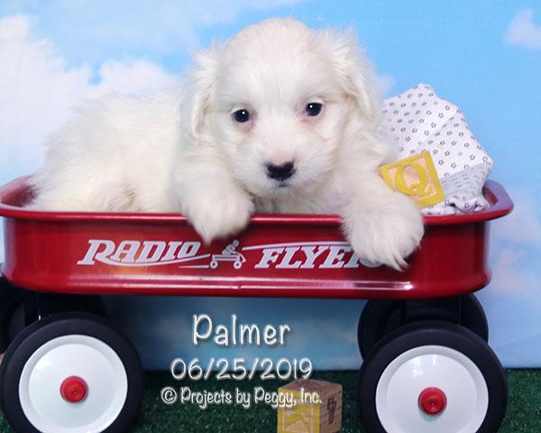 Palmer (M)