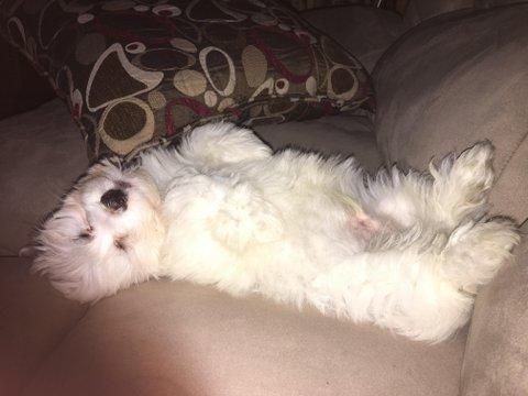 A Sociable Little Pup