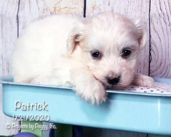 Patrick (M)