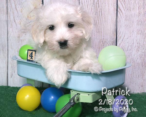 Patrick (M) – Reserved