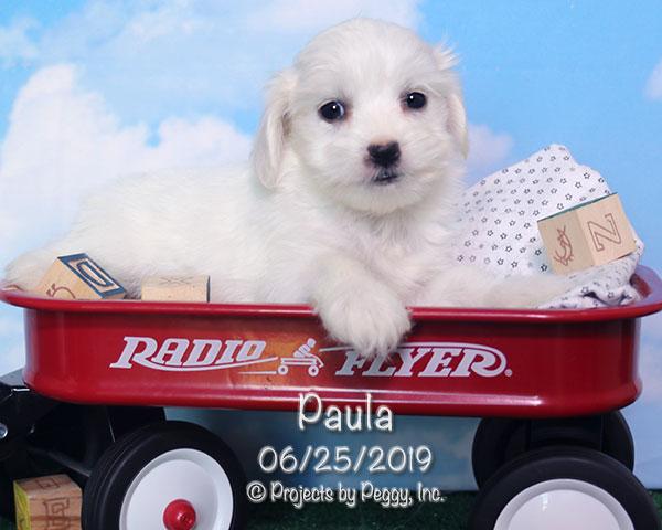 Paula (F)