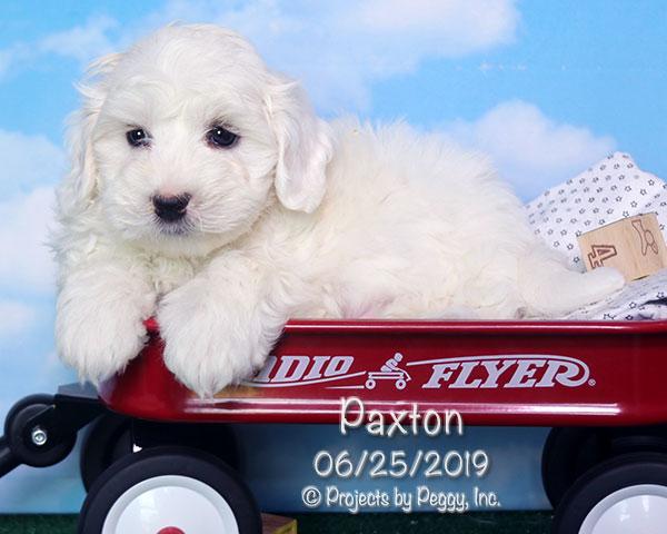 Paxton (M)