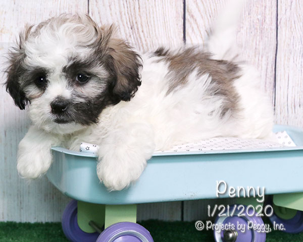 Penny (F) – Reserved