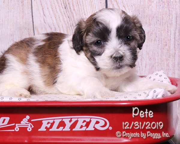 Pete (M) – Reserved