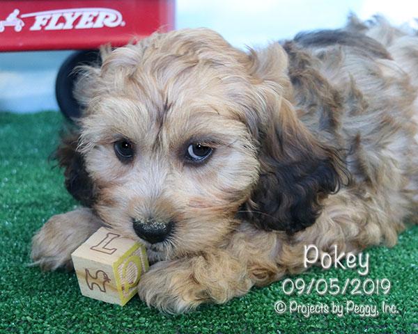 Pokey (M)