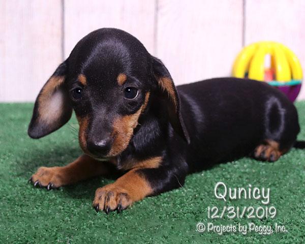 Quincy (F)