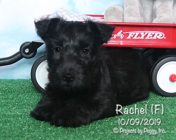 Rachel (F)