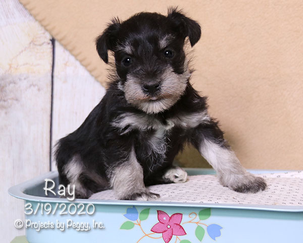Ray (M) – Reserved