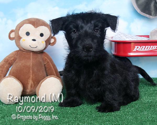 Raymond (M)