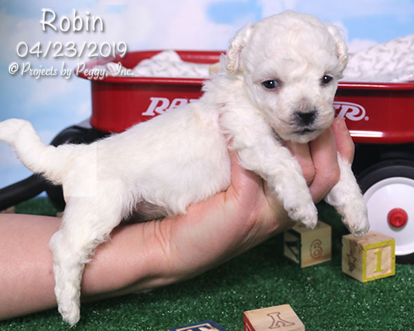 Robin (F) – Reserved