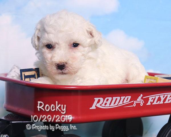 Rocky (M)