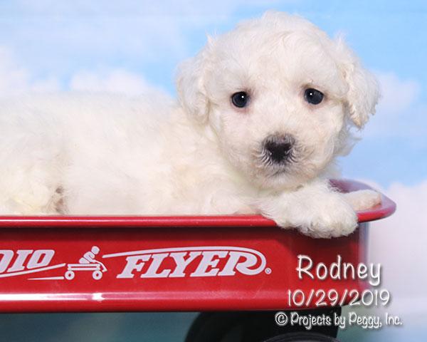 Rodney (M)