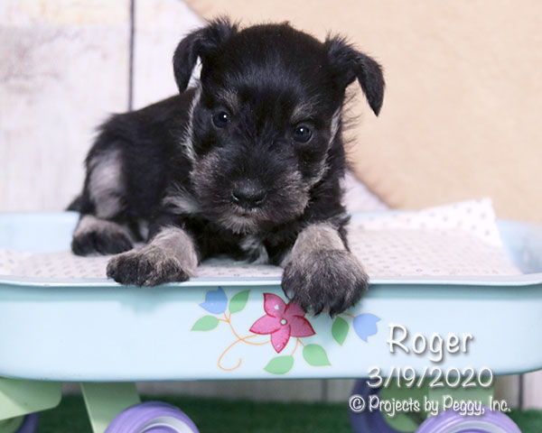 Roger (M) – Reserved