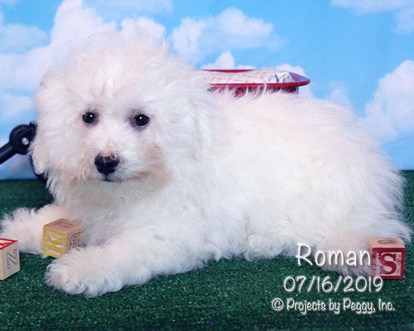 Bichon Frise Puppies For Sale in PA » Martin's Double E