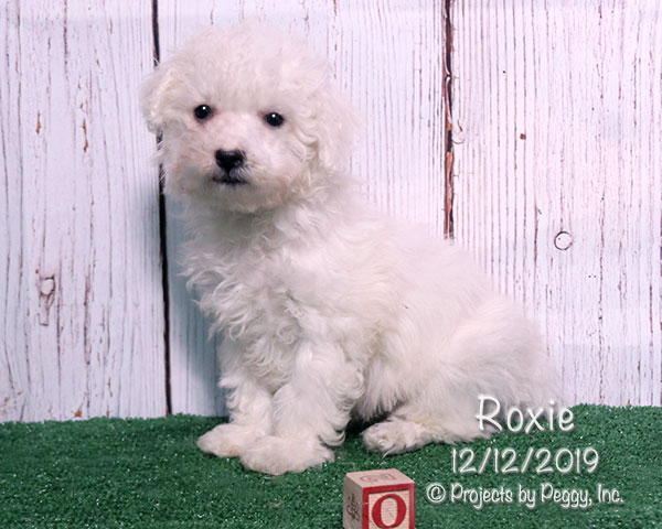 Roxie (F) – Sold
