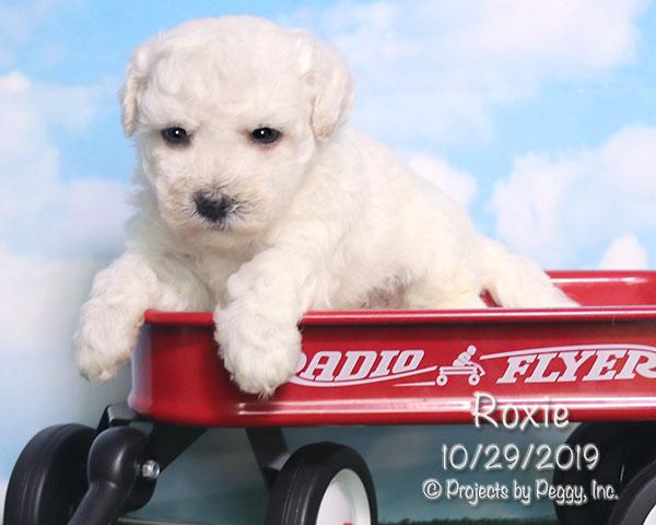 Roxie (F)