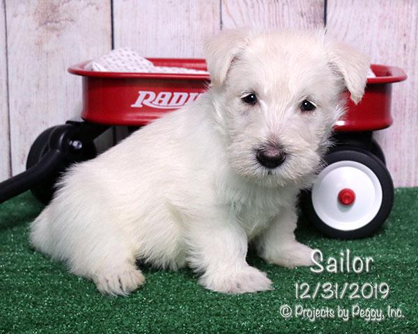Sailor (M)
