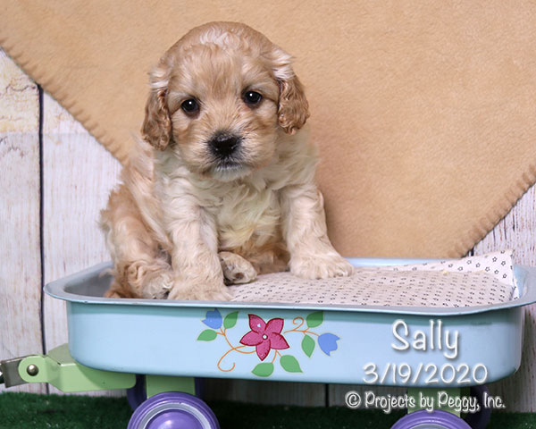Sally (F) – Reserved