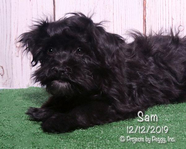Sam (M)