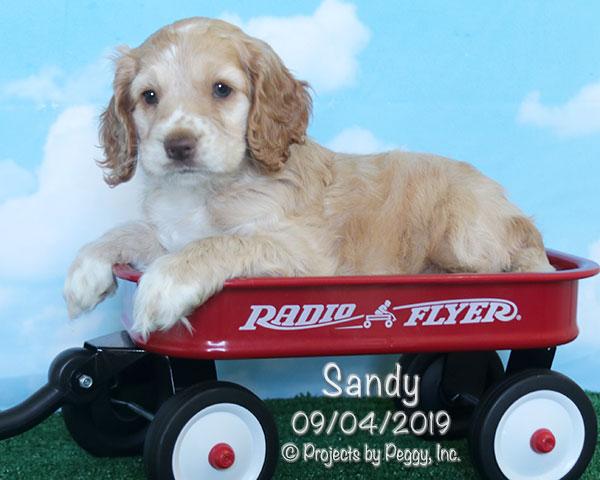 Sandy (F) – Sold