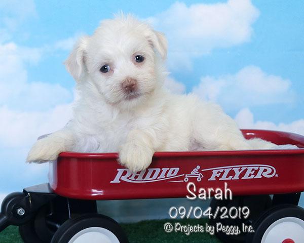 Sarah (F) – Sold
