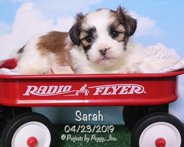 Sarah (F) – Reserved